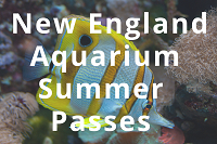 Summer Passes Available for the New England Aquarium thumbnail Photo